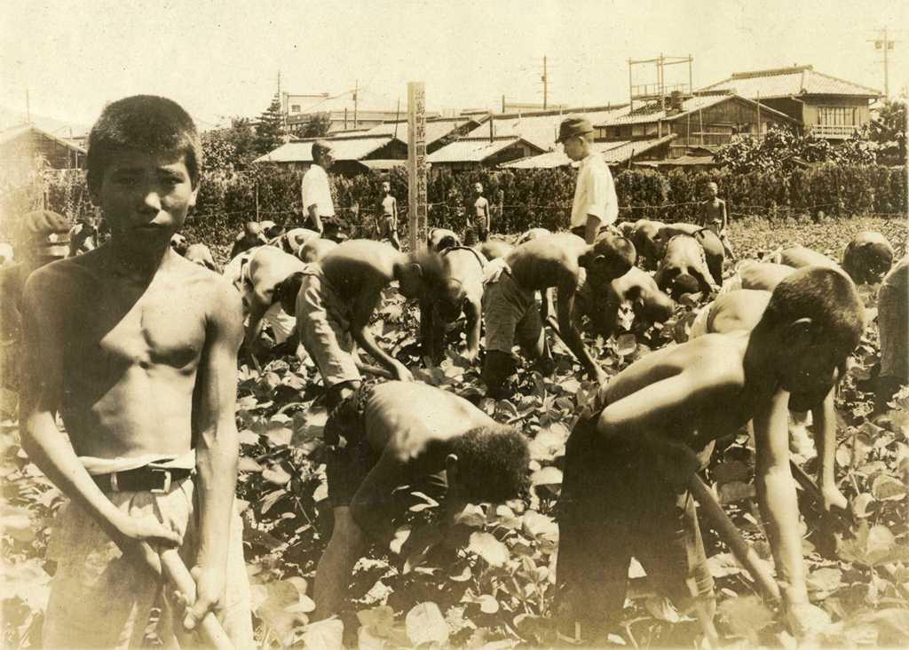 津島町第一国民学校 報国農場