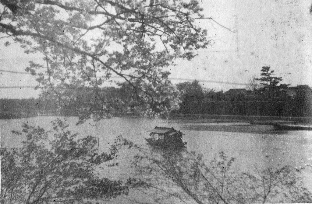 天王川、公園へ 大正後期 東堤の桜から望む遊覧船「笑富久丸」